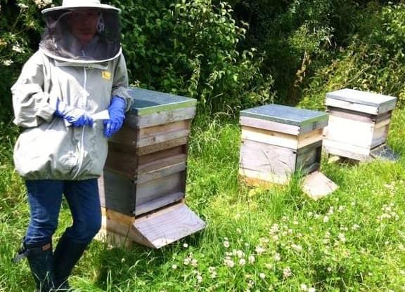 Beekeeping in August